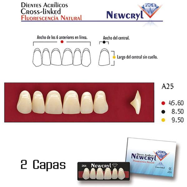 Dientes Acrílicos Newcryl Superiores Color A3